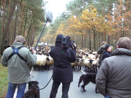 It wasn't just humans in the way of the convoy - trucks, tractors and sheep were also obstacles