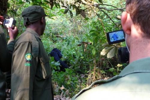 On location filming Gorillas for Saatchi&Saatchi